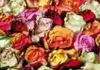 mercato fiori torre annunziata assunzioni